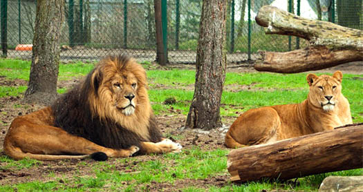 Парк Тайган со Львами